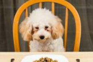 Guía para usar dieta para perros con vómito