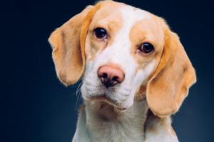 Ruidos del estómago del perro: ¿Qué significan?