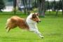 Consejos para cuidar la piel y el abrigo de su perro