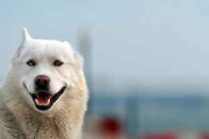 ¿Podría su perro beneficiarse del tratamiento de acupuntura?