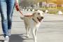 Entrenamiento de perros: caminar con correa.