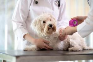 Cómo cuidar la uña del pie rasgada de un perro