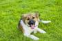 Inflamación del cerebro y la médula espinal en perros