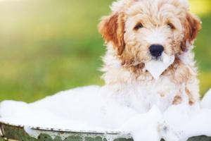 Una higiene deficiente en los perros puede tener consecuencias graves