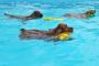 Cómo enseñar a un perro a nadar