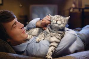 ¿Qué nutrientes necesita tu gato en sus comidas?