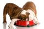 6 consejos para retardar a un perro que come demasiado rápido
