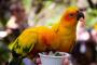 """""""Regalos"""" caseros que usted puede hacerle a su ave mascota"""
