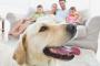 Consejos prácticos para un hogar amigable para perros