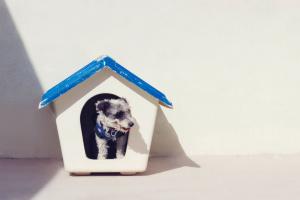 Rinitis y sinusitis en perros