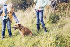 ¿Pueden los perros comer arándanos?