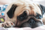 Accidente cerebrovascular en perros: síntomas, causas y tratamientos.