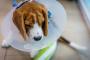 8 tratamientos alternativos para el cáncer de perros
