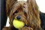 6 divertidas formas de estimular la mente de tu cachorro a través del juego