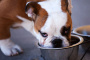 Gomas hinchadas en perros
