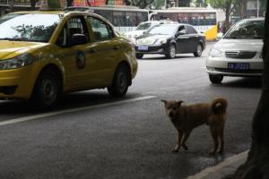 Perros heridos en el camino