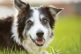 Puntos calientes en perros: causas, tratamiento y prevención
