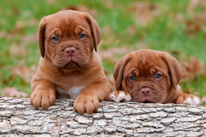 ¿Qué causa la diarrea del cachorro?