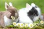 Inflamación del cerebro y tejido cerebral en conejos