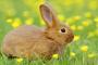 Pérdida del control voluntario de la micción en conejos