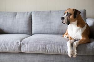 Terapia con láser para perros