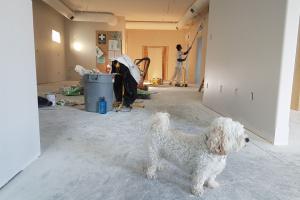 Reubicación de perros (consejos para ayudar a su perro a adaptarse al cambio)