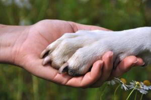 10 cosas increíbles que tu perro puede percibir sobre ti