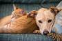 Genética de perros y gatos: todo lo que necesita saber