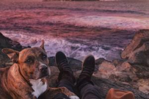 Exceso de cartílago y crecimiento óseo deficiente en perros