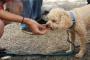 Por qué los perros piden tocino y lo que necesita saber