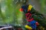Lo que tiene que saber acerca de bañar a su ave