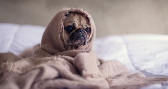 El síndrome similar a Sjögren en perros