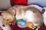 Problemas de conducta materna en perros hembra