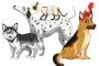 Toxicidad de Bola de naftalinal en Mascotas: Lo que usted necesita saber