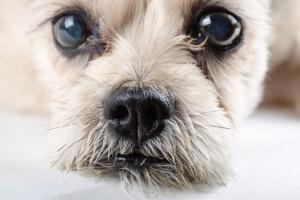 Mirando a los perros: todo lo que quieres saber