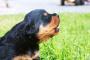 Comunicación vocal: Interpretación de perro
