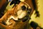 10 razones por las cuales los padres de mascotas están cambiando sus perros al aceite de Krill