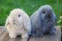 Cáncer uterino en conejos
