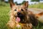 Enfermedad de Cushing en perros