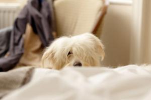 ¿Por qué mi perro no duerme de noche?