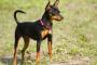 La ampliación de Jawbone en perros