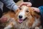 5 consejos para socializar a tu cachorro