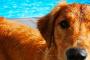 Recompensas caninas tóxicas , ¡no solo de China!