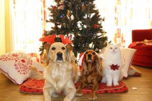 6 razones para amar la Navidad con mascotas
