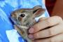 Reproducción y cría de conejos