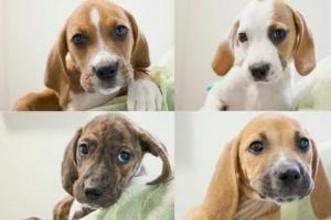 Su cachorro: meses 6-9