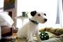 Responsabilidades para los padres del perro recién adoptado