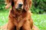 Artritis canina: 6 cosas que los dueños de perros deben saber
