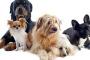 Programa de esterilización / esterilización tiene como objetivo prevenir la sobrepoblación de mascotas