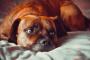 ¿Afecta el desorden afectivo estacional a las mascotas?